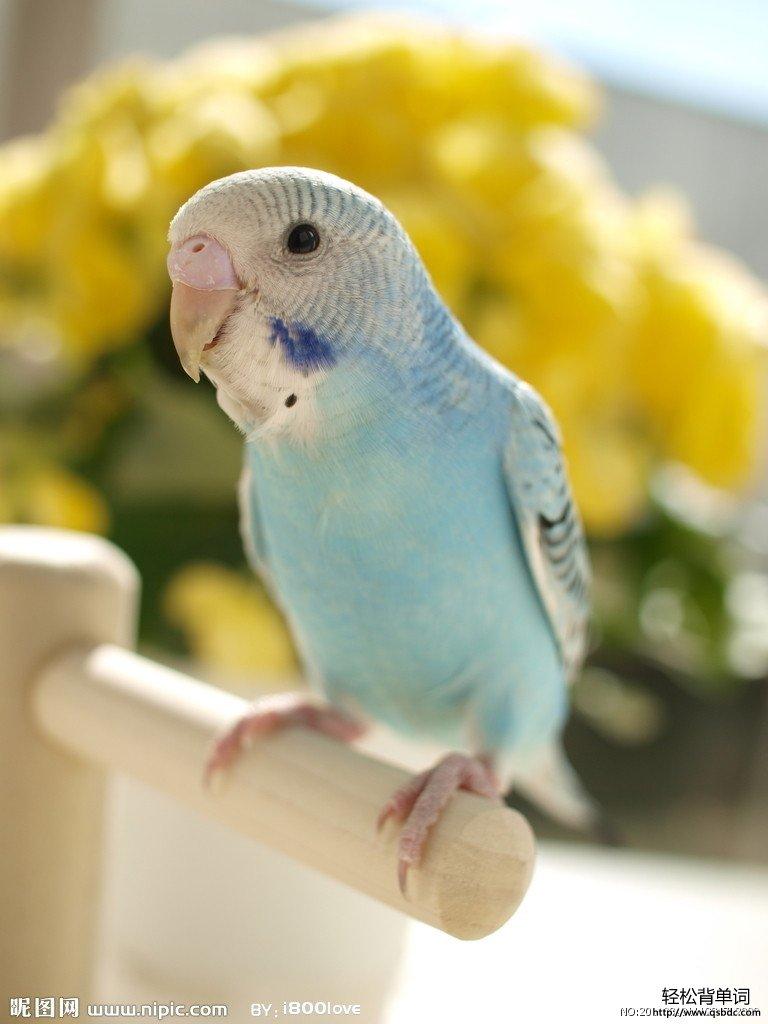 动物名称相关英语词汇 --- (7)_怎样背单词